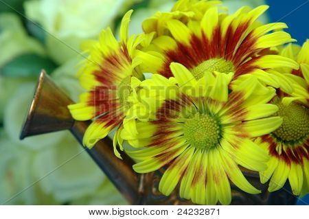 Bright Yellow and Red Chrysanthemum