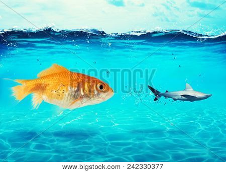 Big Goldfish Attacks A Scared Shark In The Deep Ocean. Concept Of Bravery