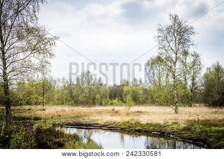 Wilderness In The Spring With Birch Trees By A Small Stream In Cloudy Weather