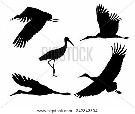Set Of Realistic Silhouettes Stork Or Heron, Flying And Standing - Vector