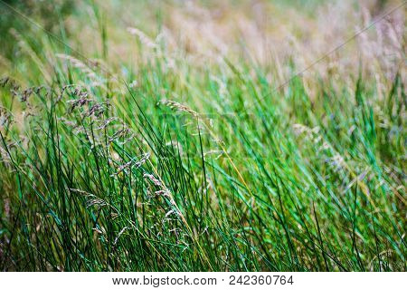 Summer Grassland Background