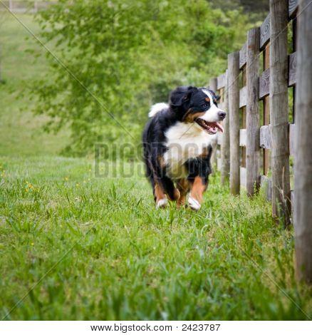 Running, Smiling Dog.