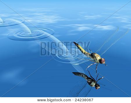 dragonfly and water