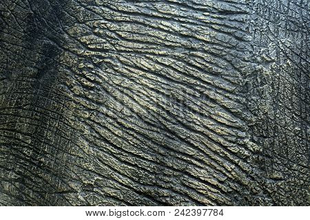 The Skin Of A Dinosaur Or Animal Skin For The Background.
