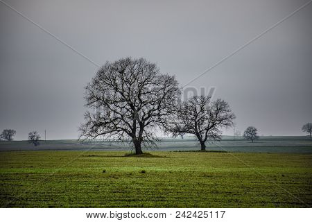 Winter Time Landscape Image Of Tree Or Green Field, Meadow With Tree At Winter Time. Cloudy Sky. Aze