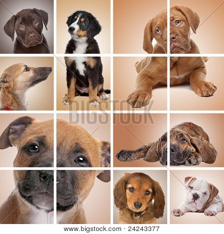 Puppy Themed Collage