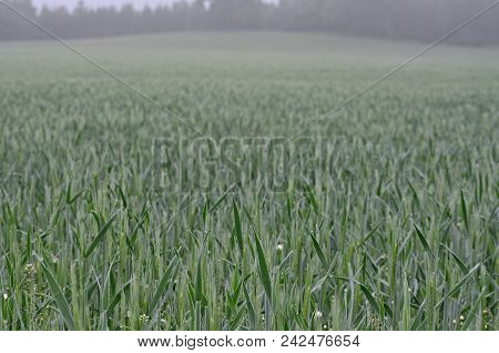 View Sown Fields , Southern Bohemia, Czech Republic