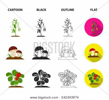 Mushrooms, Strawberries, Corn, Cucumber.plant Set Collection Icons In Cartoon, Black, Outline, Flat