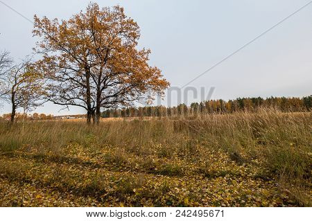 Autumn Landscape In A Cloudy Evening Is Full Of Melancholy. Lonely Trees With Withering Foliage Amid