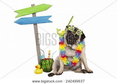 Cute Smart Pug Puppy Dog Sitting Down With Watermelon Cocktail, Wearing Hawaiian Flower Garland, Gog