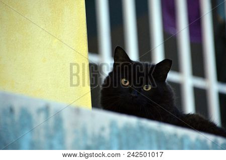 A Black Cat Staring Down The Camera