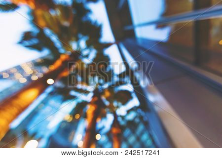 Defocused Blurred View Of Palm Trees In Los Angeles, Ca