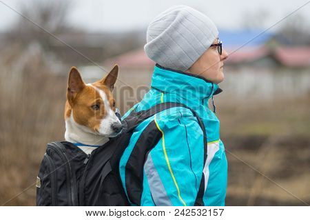 Basenji Dog Having Nice Hike When Its Own Cute Porter Carries It Inside Comfortable Backpack