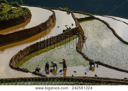 People Working On Terraced Rice Field At Sunny Day In Sapa, Vietnam. Sa Pa Is Famous For The Terrace