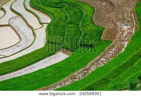 Terraced Rice Field At Sunny Day In Sapa, Vietnam. Sa Pa Is Famous For The Terraced Rice Fields In N