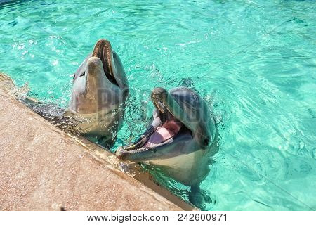 Two Cute Laughing Dolphins In The Water. Dolphin Underwater Sea Background.