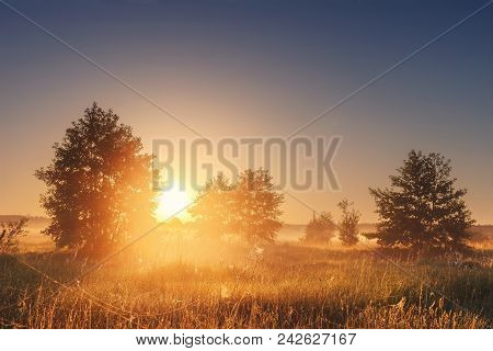 Landscape Of Bright Sunrise Over Summer Misty Meadow With Trees On Clear Morning. Natural Rural Scen