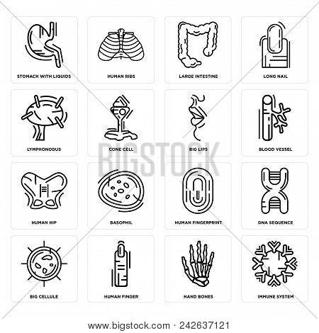 Set Of 16 Simple Editable Icons Such As Immune System, Hand Bones, Human Finger, Big Cellule, Dna Se