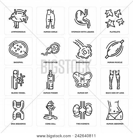 Set Of 16 Simple Editable Icons Such As Human Abdomen, Two Kidneys, Cone Cell, Dna Sequence, Back Si