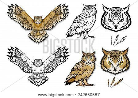 Set Of Different Owls. Owl Logo. Wild Birds Drawing. Head Of An Owl. Vector Graphics To Design.