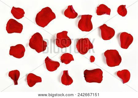 A Number Of Rose Petals On White Surface