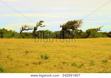 Windswept Desolate Landscape Including Trees Shaped From The Wind Taken At The Rural Hawaiian Coast