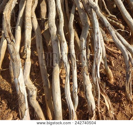 Plant Roots Dig Into The Parched Soil Under The Rays Of The Hot Sun (texture)