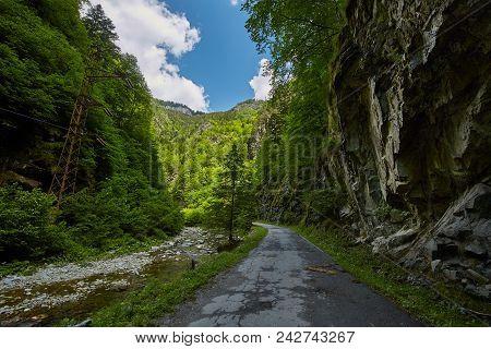 Beautiful Gorge In Carpathian Mountains