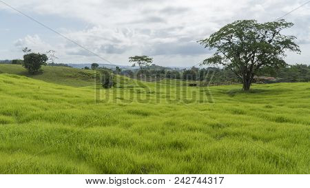 Grassland With Some Trees In Costa Rica