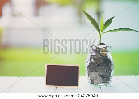 Money Saving And Investment Financial Concept. Plant Growing In Savings Coins With Blank Screen Smal