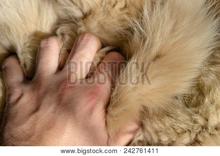 Young Man Touches Fur. Beautiful Fur Background.