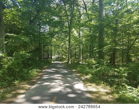 Asphalt Bike Trail In The Woods Or Forest With Green Trees