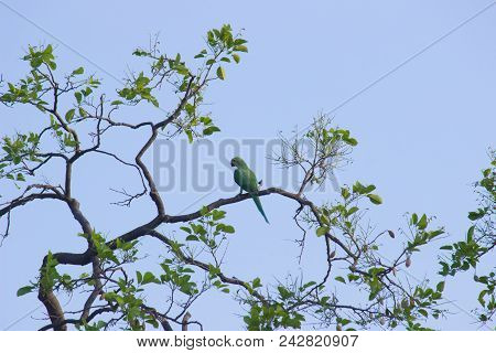 Parrots, Also Known As Psittacines, Are Birds Of The Roughly 393 Species In 92 Genera That Make Up T
