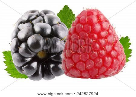 Isolated Berries. One Raspberry And One Blackberry Fruits With Leaves Isolated On White Background W