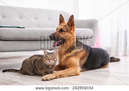 Adorable Cat And Dog Resting Together Near Sofa Indoors. Animal Friendship