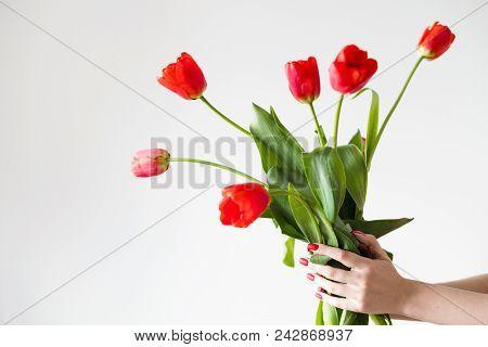 Flower Delivery. Florist Holding A Red Tulip Bouquet. Festive Floral Arrangement