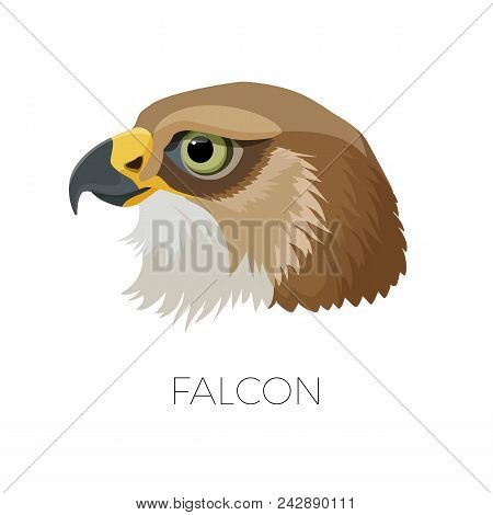 Falcon Gorgeous Profile With Sharp Beak And Green Eyes. Noble Bird That Has Meaningful Look And Brow