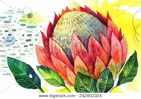 Hand Drawn Stylized Watercolor Illustration Of Protea Flower On Decorative Textured Background For P