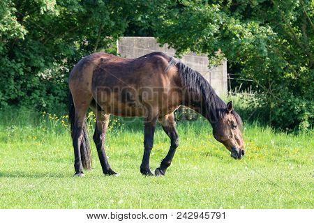 Horses Graze On Pasture / Horses Graze On Pasture