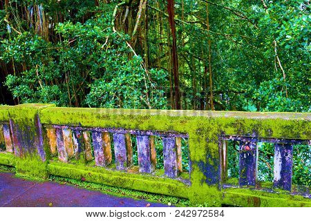Rustic Bridge Covered In Moss Over The Wailuku River Surrounded By A Lush Green Forest Taken In Hilo