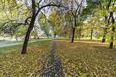 Milan, Lombardy, Italy: the park known as Parco Nord in a sunny autumn afternoon poster