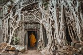 Monk, giant tree and roots in temple Ta Prom Angkor wat Cambodia landmark poster