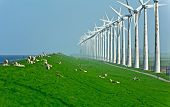 Windmills and sheep along a dam, Holland, Europe poster