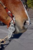 Western Equestrian Bit And Headstall on Horse's Head poster