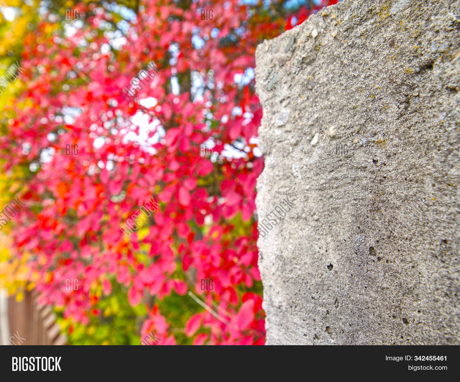 Red Purple Leaves On Image Photo Free Trial Bigstock