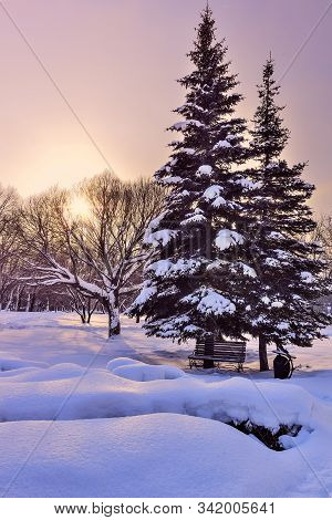 Picturesque Colorful Winter Landscape In City Park At Sunrise. Wooden Bench Under Beautiful Snow Cov