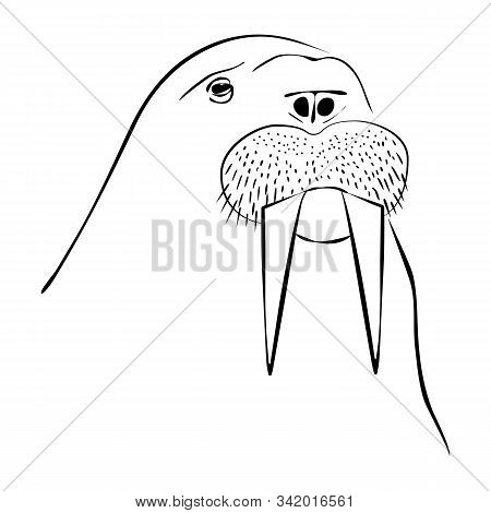 Vector Illustration Of Hand-drawn Lines Kind And Funny Walrus Character. Made In The Style Of An Out