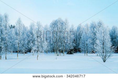Snowy Forest At Countryside Winter Rovaniemi In Lapland Reflex