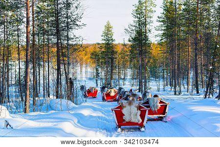 People Riding Reindeer Sled Caravan In Winter Forest In Rovaniemi Reflex