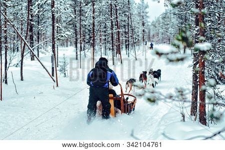 Family Riding Husky Dog Sled In Finland In Lapland Winter Reflex